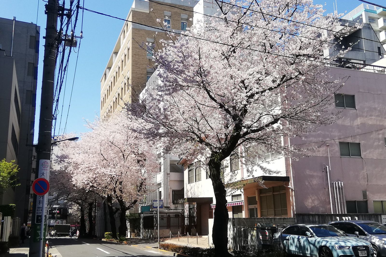 豊島区南大塚の桜並木